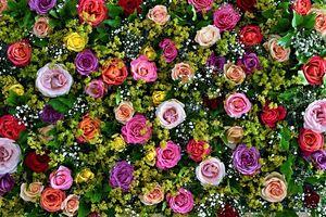 Фото бесплатно флоры, икебана, цветочный фон
