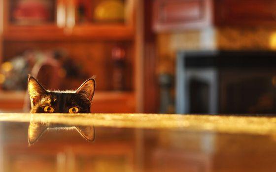 Photo free cat, table, eyes