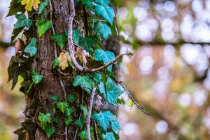 Photo free tree, bokeh, leaves