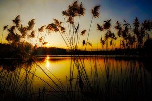 Заставки закат озеро, водоём, тростник