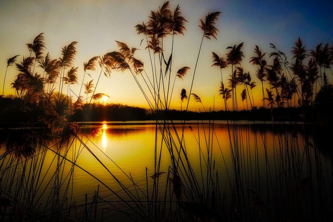 Фото бесплатно закат озеро водоём тростник - на рабочий стол
