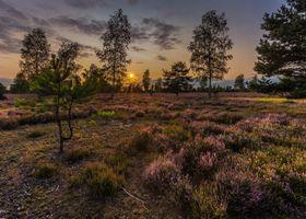 Бесплатные фото трава,закат,чистое небо,вечер,поле,лаванда,деревья