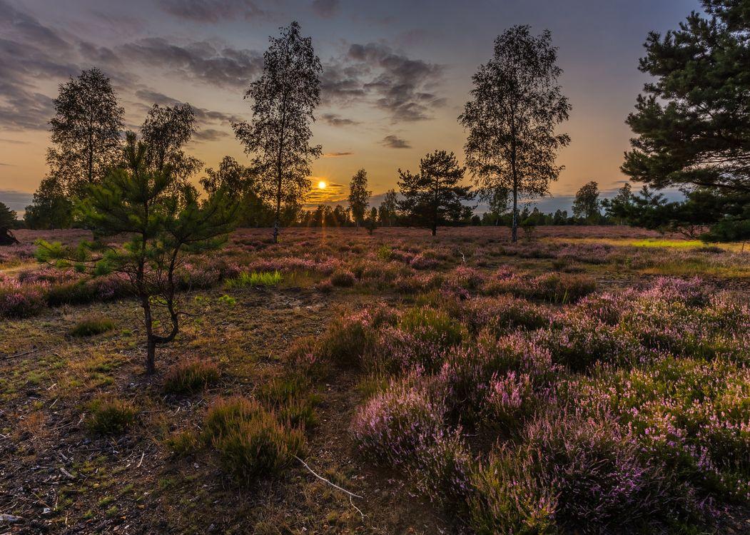 Фото бесплатно трава, закат, чистое небо, вечер, поле, лаванда, деревья, цветы, природа, пейзаж, пейзажи