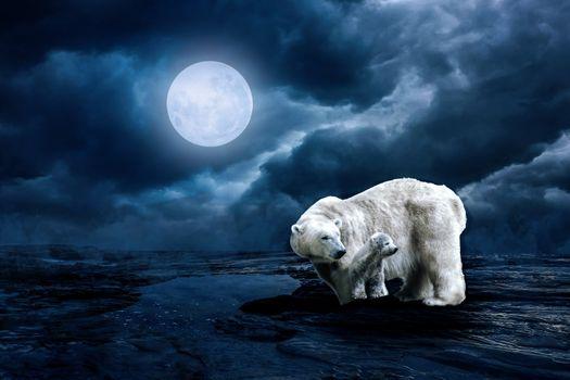 Заставки белый медведь, молодое животное, луна