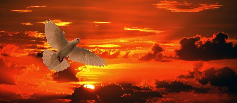 Фото бесплатно голубь, птица, полет