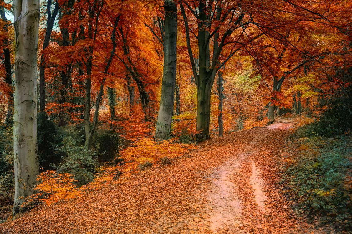 Фото бесплатно осень, дорога, лес, деревья, краски осени, природа, пейзаж, пейзажи