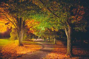 Бесплатные фото осень,парк,ночь,лес дорога,деревья,освещение,пейзаж