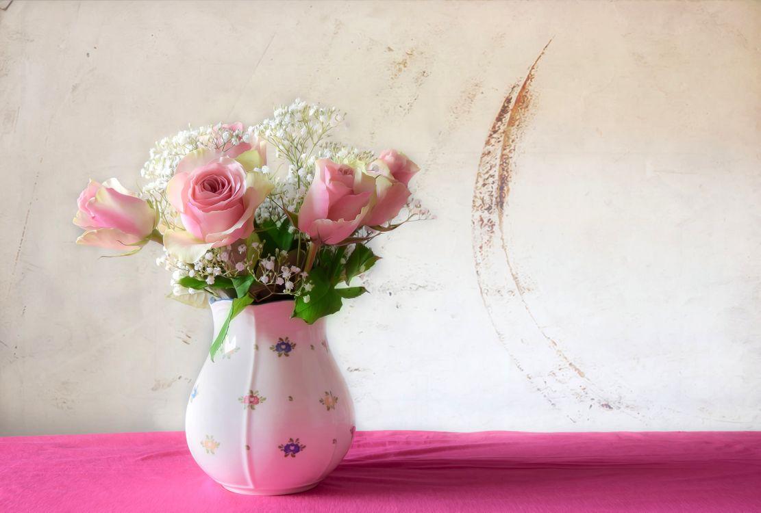 Домашняя роза · бесплатное фото
