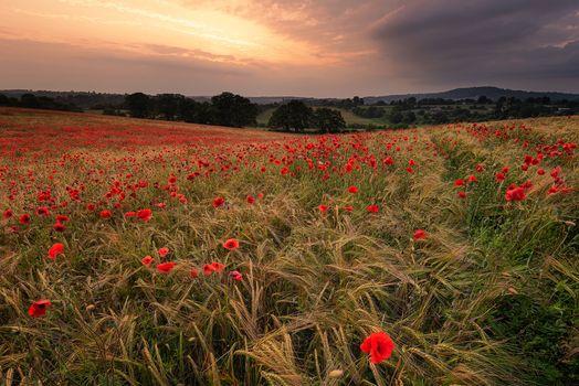 Фото бесплатно природа, поле, холмы