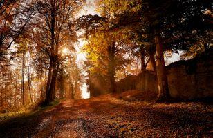 Фото бесплатно осень, солнечные лучи, ветви