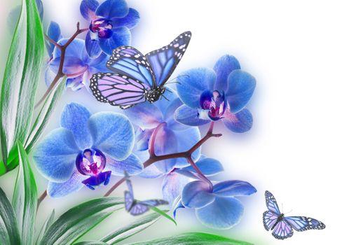 Фото бесплатно боке, бабочки, бабочка