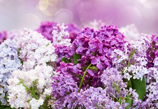 Screensaver flora, a bouquet of lilacs on android