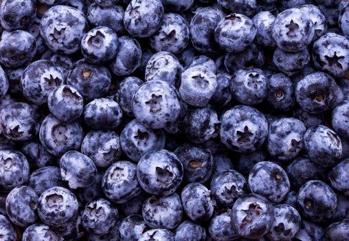 Bilberry · free photo