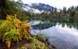 Заставки папоротник, озеро, туман