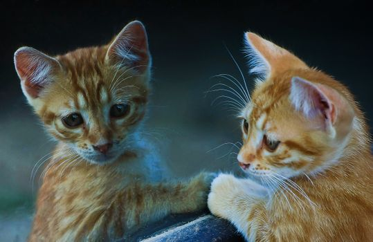 Photo free kitten, mirror, reflection