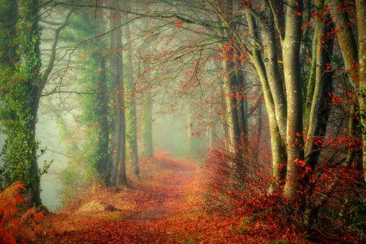 Photo free autumn leaves, path, fog