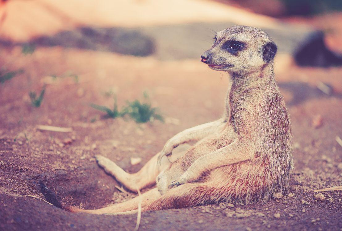 Фото природа пустыня животное - бесплатные картинки на Fonwall