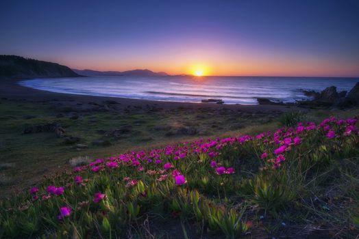 Photo free sunset, purple flowers, ocean