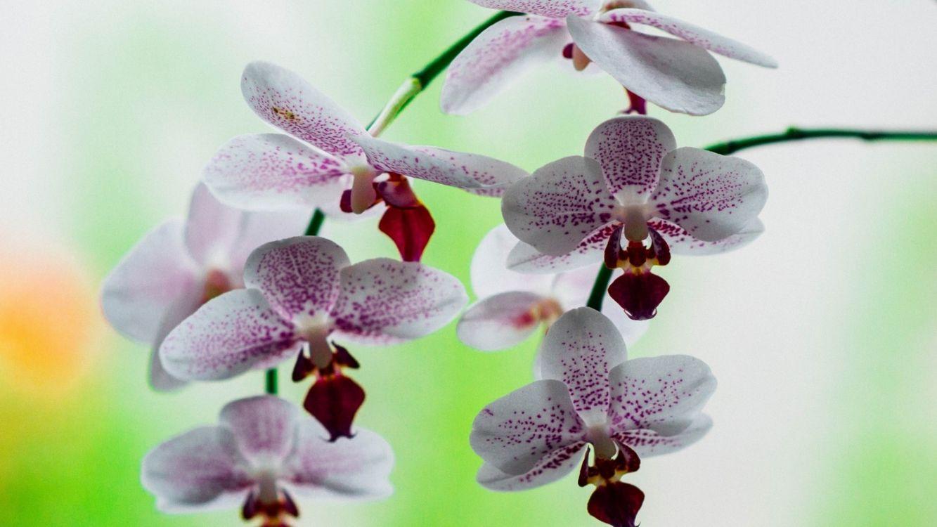 Фото бесплатно ветки цветы, фон, орхидеи, цветы