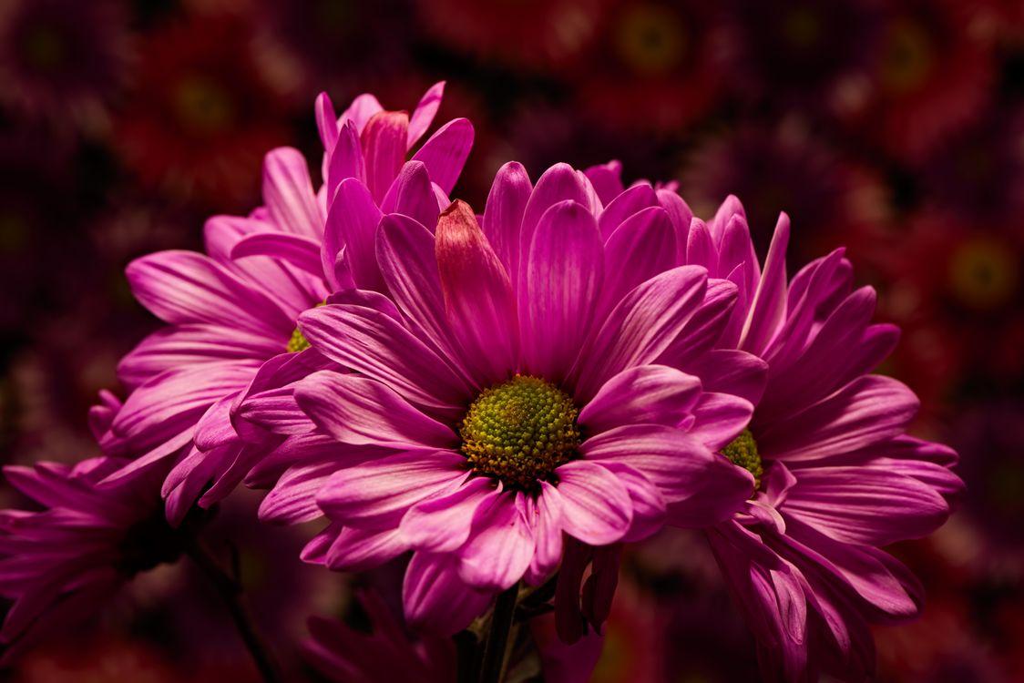 Фото бесплатно Розовый праздник, букет, флора - на рабочий стол