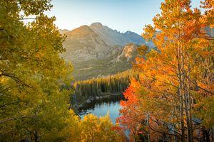 Осень в парке Аспен Форест · бесплатное фото
