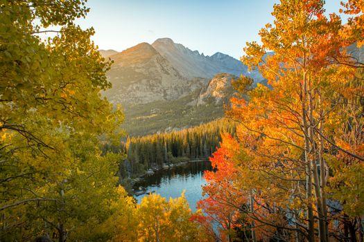 Autumn in Aspen Park Forest · free photo