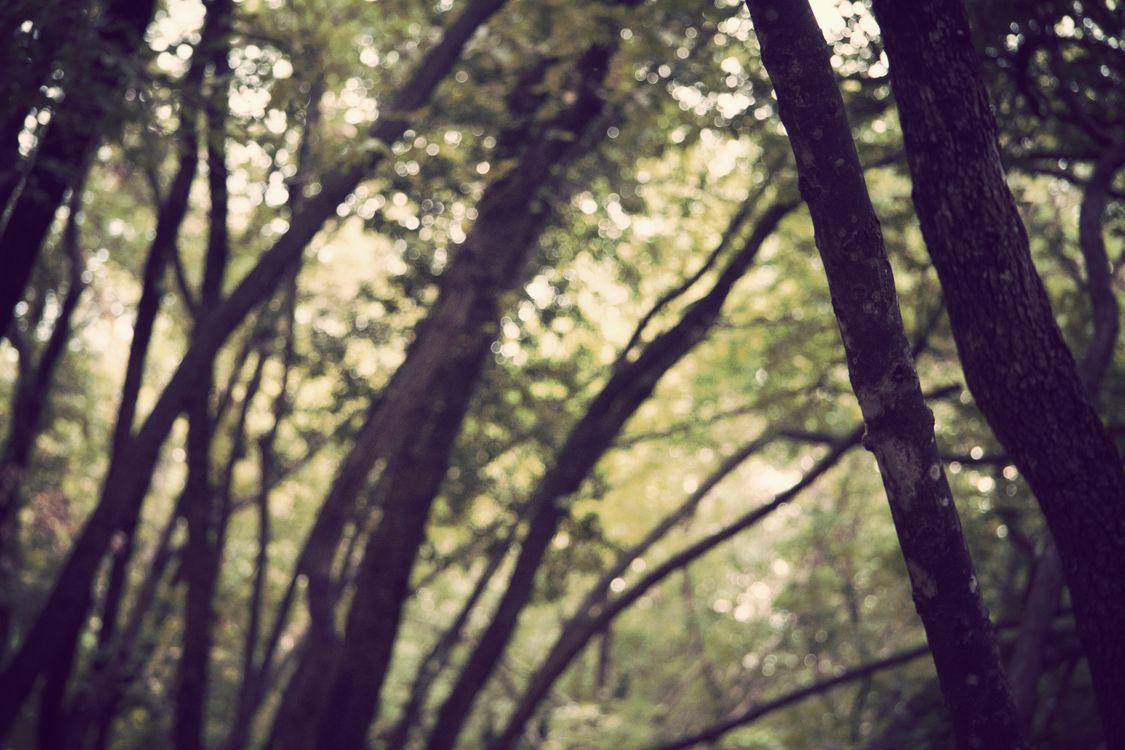 Фото Sunbeam лес растения - бесплатные картинки на Fonwall