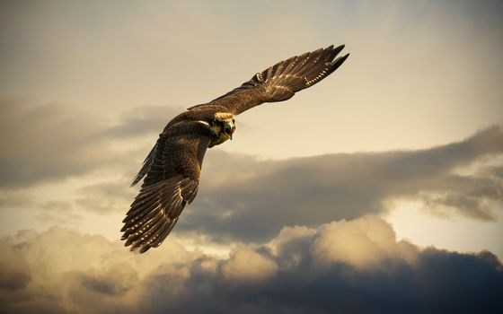 Photo free eagle, sky, soar
