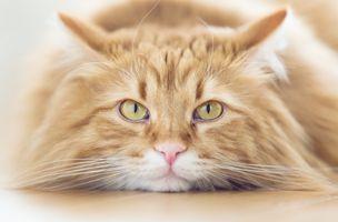 Фото бесплатно кот, кошка, морда, взгляд, домашнее животное