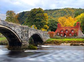 Фото бесплатно деревья, чайный домик, Северный уэльс