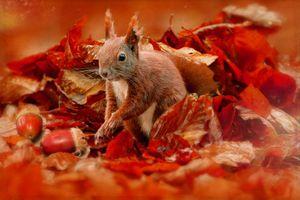 Бесплатные фото осень,белка,осенние листья,жёлуди,природа