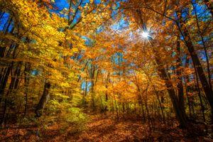 Фото бесплатно деревья, листва, осень цвета