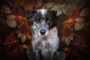 Собака в листве