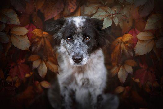 Собака в листве · бесплатное фото