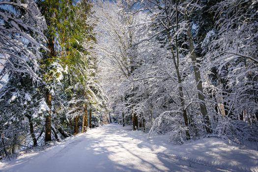 Зимняя дорога возле реки
