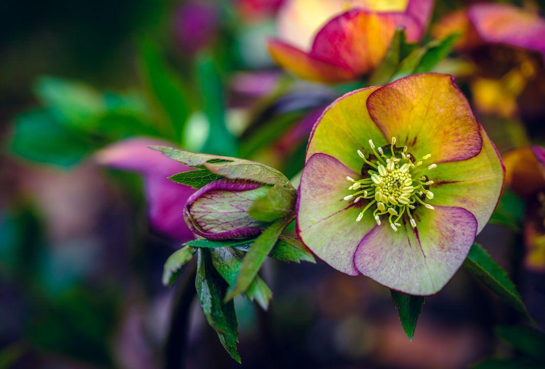 Free photo macro, plant, flower - to desktop