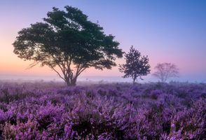Фото бесплатно закат, цветы, туман