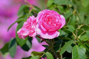 Фото бесплатно ветка, цветок, флора