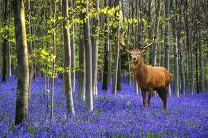 Фото бесплатно животное, лес, олень