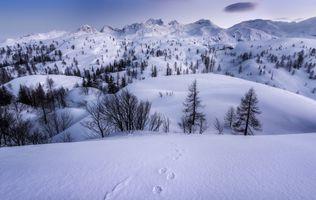 Бесплатные фото зима,горы,холмы,сугробы,снег,деревья,следы