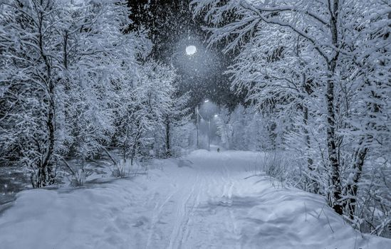Фото бесплатно зима, снег, парк
