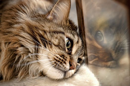 Photo free cat, animals, reflection