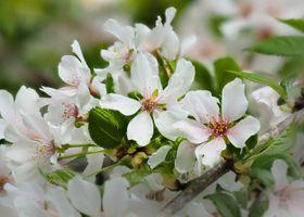 Заставки макро, цветение, цветущие ветви