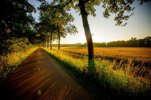 Фото бесплатно поле, лес, трава