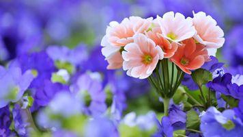 Фото бесплатно цветы, сад, пейзаж
