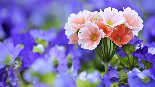 Фото бесплатно цветы, сад, пейзаж, любовь, природа, романтика, розы, весна