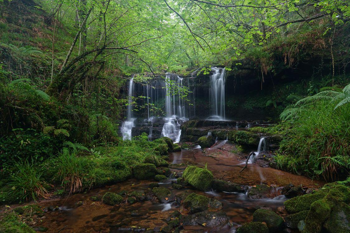 Фото бесплатно пейзаж, лес, скалы - на рабочий стол