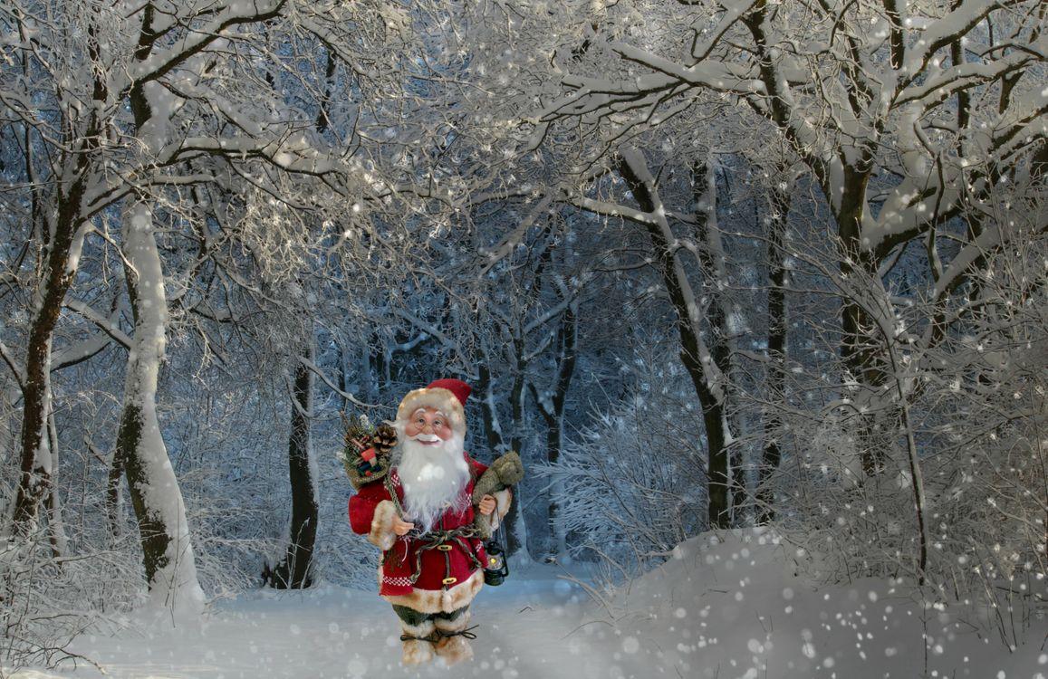 Фото бесплатно зима, лес, снег, деревья, Рождество, фон, дизайн - на рабочий стол