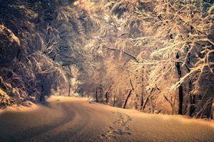 Фото бесплатно ночь, деревья, освещение