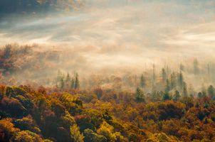 Заставки туман, осень, утро